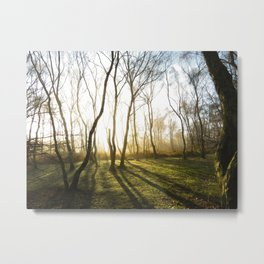 Sherwood Metal Print