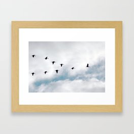 """Flock"" by Murray Bolesta Framed Art Print"