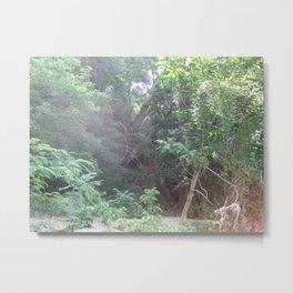 Jungle Summer in Virginia Metal Print