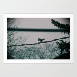 Squirrel on wire Art Print