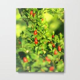 pepper Metal Print