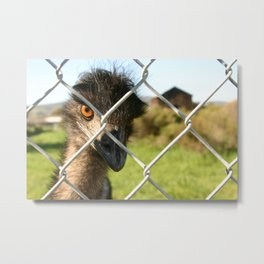 The angry Emu Eye Metal Print