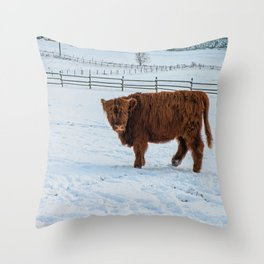 Are you looking at me, Scotish Highland Cow Throw Pillow