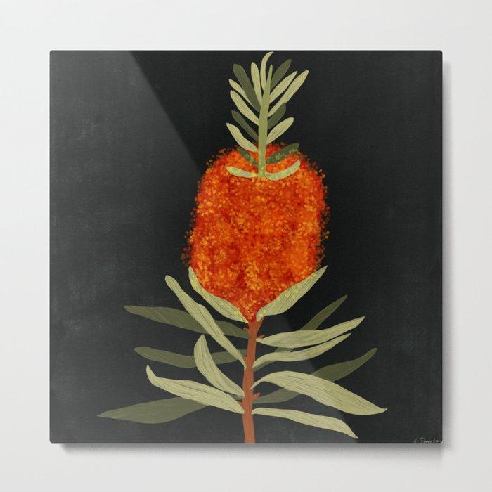 Bottlebrush Flower Metal Print