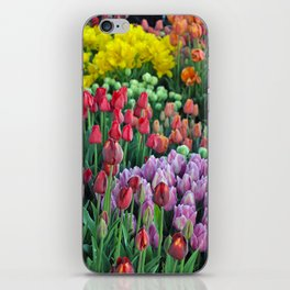 Colorful bunches of spring tulips iPhone Skin