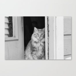 Doorway Cat 2 Canvas Print