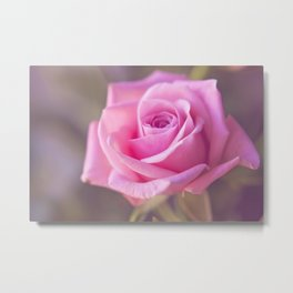 SOFT ROSE II Metal Print