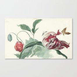 Tulip and a Poppy Vintage Botanical Art Canvas Print