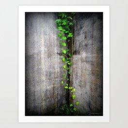 Green Climbing Vine, Bocas Del Toro Art Print