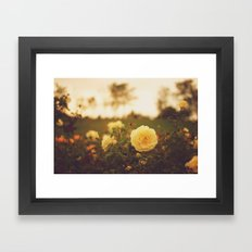 Yellow Roses Framed Art Print