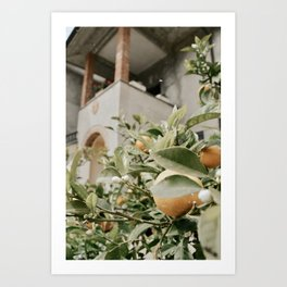 oranges at the villa Art Print