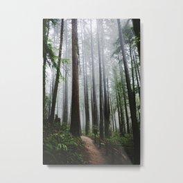 Forest Park Metal Print