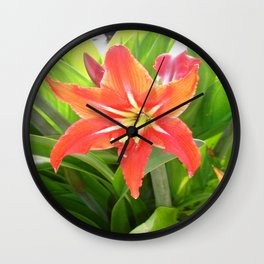 Orange Amaryllis Flower Blooms in Springtime  Wall Clock