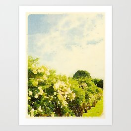 Hydrangea Bushes, Kennebunkport, Maine Art Print