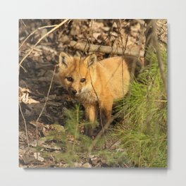Shy fox kit Metal Print