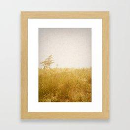 Little Tree Framed Art Print
