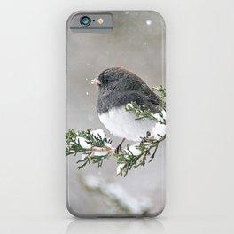 Snowbird on a Snowy Branch (Junco) iPhone Case