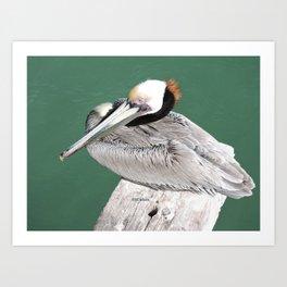 Brown Pelican near Avila Beach Art Print