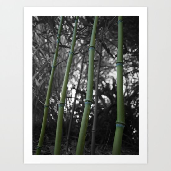 What Would You Do For Bamboo? Art Print