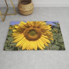Sunflower - Helianthus annuus Rug