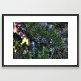 A Tree Grows In Manhattan Framed Art Print