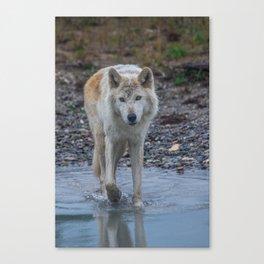 White Wolf Canvas Print