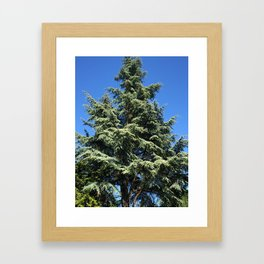 Kubota Garden tree from ground perspective Framed Art Print