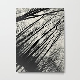Forest Through The Trees Metal Print