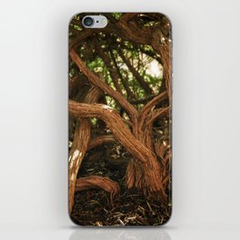 very old forest iPhone Skin