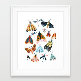 Moth Species Framed Art Print