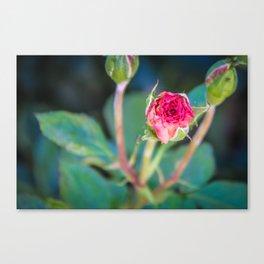 """Rose Bud"" Canvas Print"