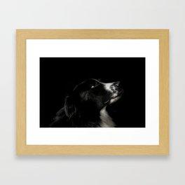 Border Collie Portrait - Bamboo Framed Art Print