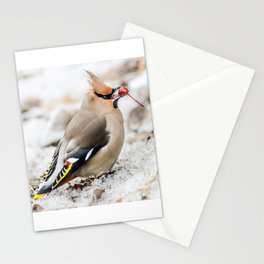 Bohemian waxwing Stationery Cards