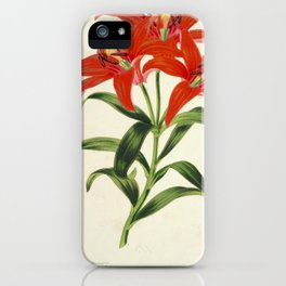 Lilium Sinicum Vintage Botanical Floral Flower Plant Scientific iPhone Case