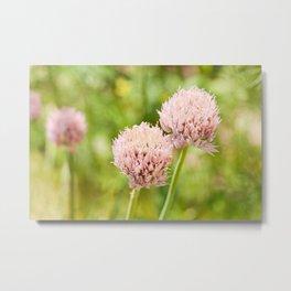 Pink chives flowering plant Metal Print