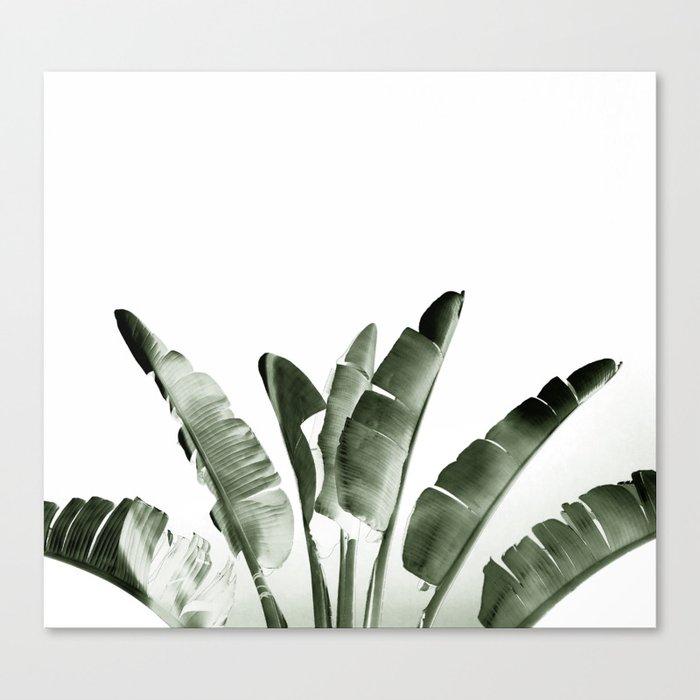 Traveler palm Canvas Print