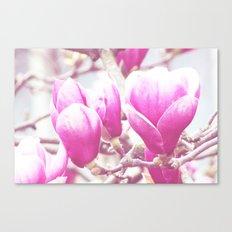 Magnolia 1 Canvas Print