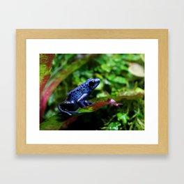 Blue Poison Dart Frog Framed Art Print