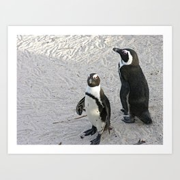 Two African Penguins Boulders Beach, Cape Town, South Africa Art Print