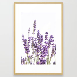 Purple Lavender #1 #decor #art #society6 Framed Art Print