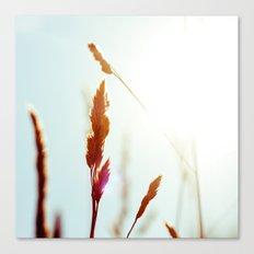 Nature Blue Reeds Canvas Print