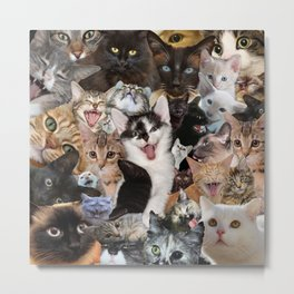 Crazy Kitten Show Metal Print