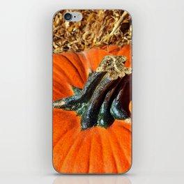 Pumpkin Stem iPhone Skin
