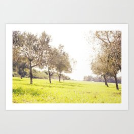 Olive trees heaven - Israel Art Print