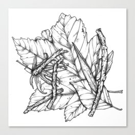 Leaves and Sticks Canvas Print