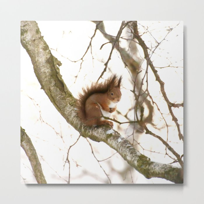 Little Friend On The Branch  Metal Print