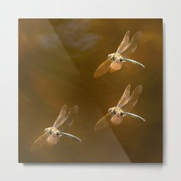 Shiny Dragonflies on the lake Metal Print