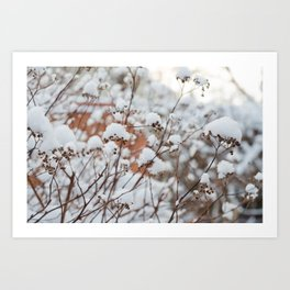 Bush in the Snow Art Print