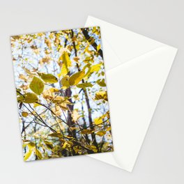 Golden Rays Stationery Cards