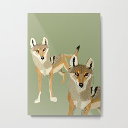 Wolves of the World: Canis lupus pallipes (c) 2017 Metal Print
